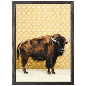 Bison Framed Canvas